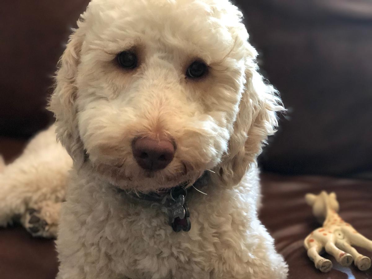 Southerndoodlin's Ginger